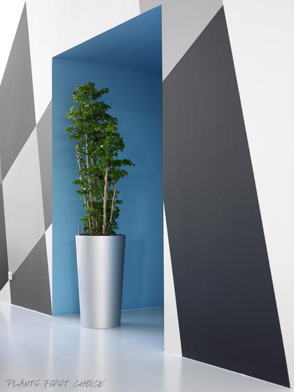 indendørsbeplantning københavn
